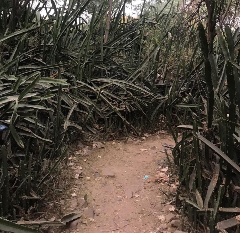 Road to Malcha Mahal